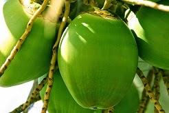 130e5-coconut2boils_2btruth2babout