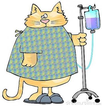 sick-cat-3697487